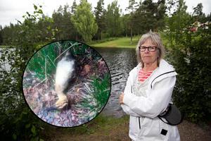 Fotomontage: Mikael Hellsten/ Privat foto.Andungar stenades till döds – vittne:
