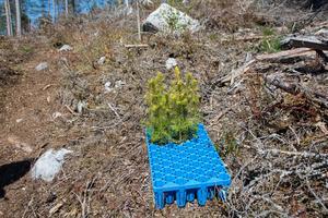 Skogsplantering är en viktig del av ett fungerande skogsbruk.