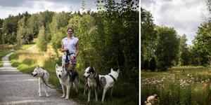 Ta med dig dina fyrbenta kompisar om du har några som sällskap, eller träffa på kossorna i hagen under din tur längst spåret i Vigelsjö.