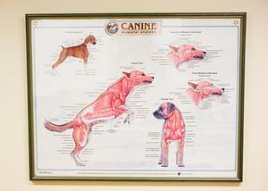 Vanligast på kliniken är hundar, men de tar också emot en hel del andra djurarter, som katter, kaniner, marsvin och råttor.