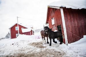 Till stallet åker Julia ungefär tre dagar i veckan. Ibland bara för att vara i närheten av hästarna.