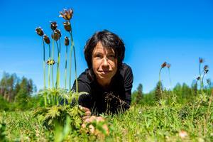 Maria Danvind har i många år räknat antalet nipsippor i området.