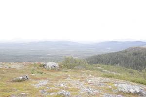 Den brukade skogen växer, och ger syre, vilket minskar växthuseffekten.