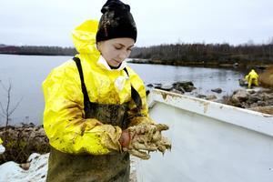 Ofelia Linander har svårt att få bort oljan.