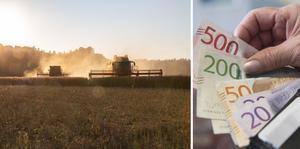 Länsstyrelsen Västra Götaland har i år valt att ge extra kompensationsstöd till miljövänligt jordbruk i pandemins fotspår.