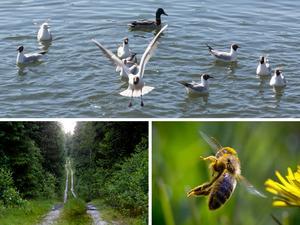 Debattörerna lyfter fram budgetsatsningar på sjöar och vattendrag, skogskötsel och pollinatörer. Foto: Tomas Karlsson, Lars Pehrson/TT och Michael Probst/AP Photo
