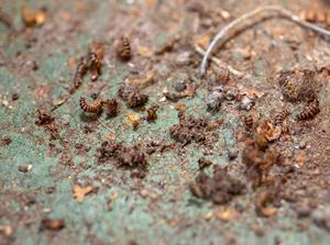 Ohyra frodas där hygien och städning inte  fungerar.