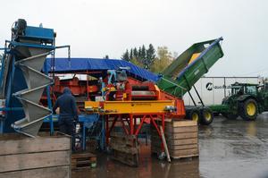Potatis från runt 100 hektar mark ska passera den första sorteringen på gården i Snöborg.