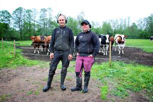 På gården finns 130 kor och i och med årets första vallskörd kan man fylla på i foderförrådet.