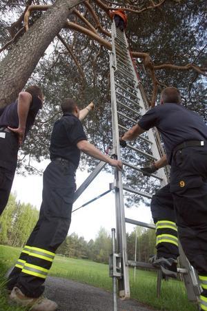 Räddningstjänsten fick använda sin 12 meter långa stege för att rädda katten Kotten ur trädet.