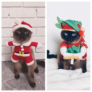 5) Blue 2 år testar olika jul-outfits, svårt att avgöra vilken han gillar bäst. Foto: Susanne Baltaci