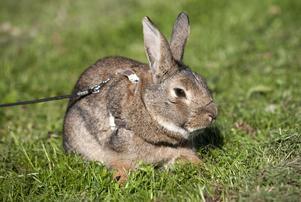 Kaninen på bilden har inget direkt samband med artikeln.