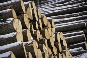 Mellanskog höjer inte priset på sågtimmer i Hälsingland. En medlem säger att andra aktörer höjer.