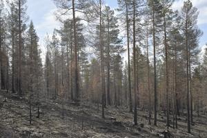 På den här höjden slog blixten ner för ett år sedan och det var i det här området som branden på Älvdalens skjutfält började.
