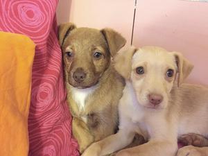 Dinas fyramånaders valp Bailey och tre andra hundar avlivades på Arlanda på grund av en pappersmiss.Foto:privat