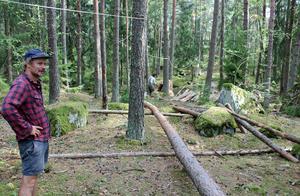 Michael Beutler visar banan där hans jätteboll rullade genom Råbyskogen förra året.