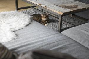 Katten har hängt med från Stockholm till Häggsjön.