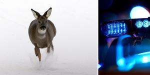 Kom ihåg att ringa 112 och göra en polisanmälan om du krockar med vilt. Bilden är ett montage av genrebilden.