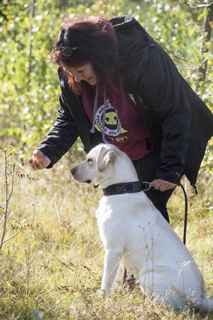 På Dala hundservice jobbar Marie Fogelquist bland annat med problemhundar och just nu håller hon på att starta upp en  filmmodul för att nå ut bredare på nätet med sina tips.