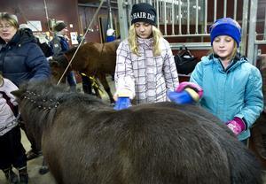 Jessica Hägglund och Malva Frisk hjälps åt att borsta manen på en av hästarna.