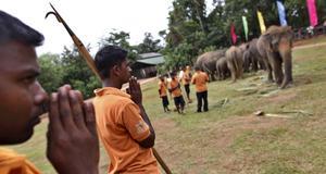 Bön under elefanternas namngivningsceremoni.