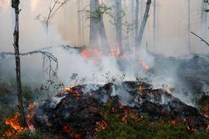 Efter branden kommer nytt liv. Bland annat får lövträden chansen igen och i naturreservatet finns fina så kallade