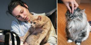 Anna Bolin med katten Jemima i famnen. Den gråa katten Hell Raise njuter av att bli klappad.