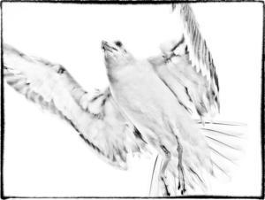 Bild av en trut. En av tolv bilder som är printade på aluminium, en teknik som gör att bilderna nästan blir grafiska.