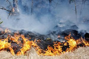 Bilden är från annan plats och har inget med branden i texten att göra.