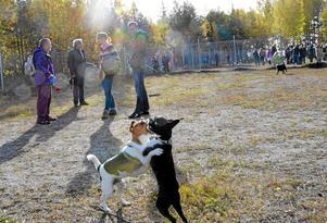 Nya bekantskaper. Hundarna Frode och Janis fann varandra snabbt i hängnet för de lite mindre hundarna. I bakgrunden Janis matte Åsa Mitander och Frodes husse och matte Johan Falk och Therese Rindberg.