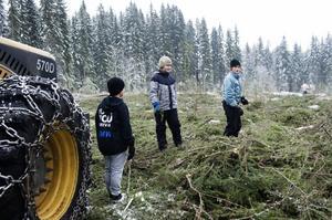 André Nylén, Edvin Karlsson och Albin Molin kollar in högarna med granris efter avverkningen.