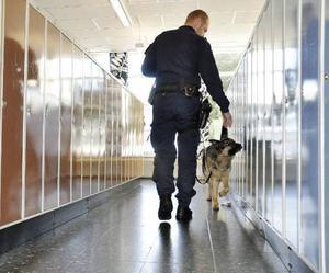 Narkotikahunden Frille här tillsammans med hundförare Pär Åkerström sökte under onsdagen igenom flera av Hjalmar Strömerskolans lokaler och skåp i jakt på narkotika som spice, cannabis och amfetamin.
