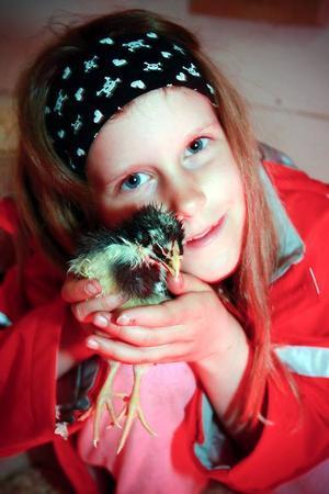 Olivia med kycklingen Pip.– Jag tycker att Sotis är  sötast, den är svart och vit.