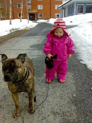 Våren!! Äntligen så pass bart att Linn klarar av att gå själv med ärtan i koppel på morgon promenad!