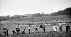 Linryckning nedanför Västanäng i Sörforsa. Bilder från vardagslivet är inte vanliga när det här fotografiet togs.