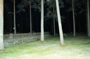 Vid 18-tiden var det väldigt kolsvart. Men ljuslyktor och tillfällig kamerablixt lyste upp kyrkogården.