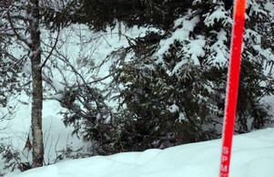 Den förolyckade 23-åringen åkte snowboard utför Skalsbacken när han av någon anledning tappade kontrollen över brädan, körde av pisten och in i några träd inne i den närbelägna skogen.      Foto: Leif Eriksson