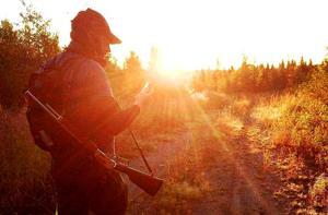 Björnjakten i Västernorrland pågår i första hand från 21 augusti fram till 15 september.