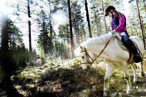 Ponnyn Snöboll med Elsa Falkenström på ryggen går vant förbi stenar och vattenpölar på skogspromenaden.
