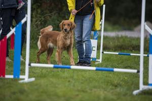 Timrå brukshundklubb håller öppet för alla hundar och ägare.