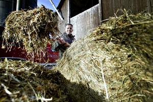 23-årige Omar från Eritrea har fått jobb på bondgård i Järbo. Här tar han hand om höensilage som korna ska ha.