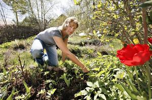 För närvarande är Margareta Sandstedt arbetslös vilket innebär att det finns tid över till att påta  i trädgården vid villan i Bomhus.