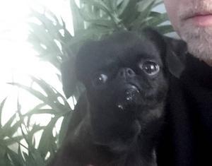 Griffonhunden Isa –liten i växten men stor nog att stoppa tåget.