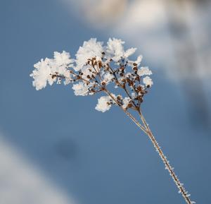 Tänk vad det enkla kan vara så naturligt och vackert!!!!!
