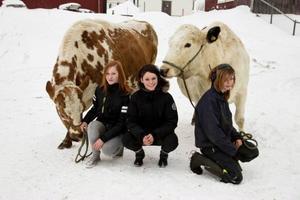 Systrarna Pålsson, från vänster, Ann, Britt och Liw antog sin väns utmaning, klädde sig i bikini, spände fast skidorna och tolkade efter oxarna Qarl Philip och Qarl Gustav. En utmaning som satt Raftsjöhöjden på kartan.