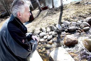 Birger Hellstrand ser ut över det strömmande vattnet som nu fått påfyllning av ensomrig lax och havsöring.