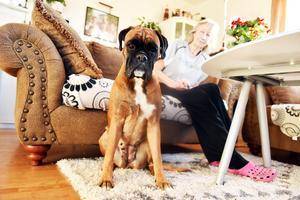 Trogna boxern Nellie är en ständig vän vid Ullas sida.