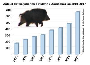 Trafikolyckor med vildsvin har ökat kraftigt.