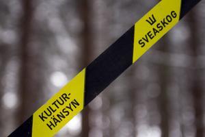 Här i skogen vid Källbacka är det avverkning på gång.