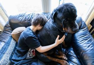 Hunden – älskad familjemedlem. Foto: Gorm Kallestad/TT